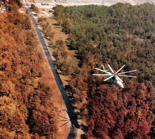 """Чернобыль """"рыжий лес"""""""