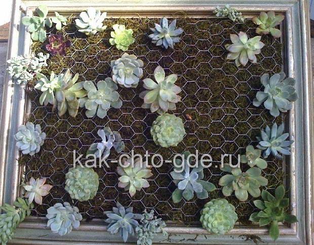 Декоративное панно подбор растений