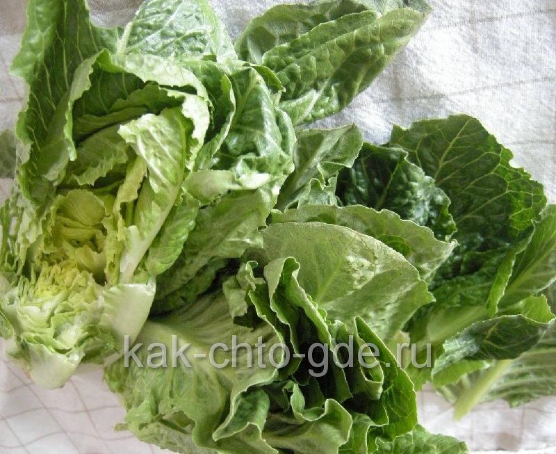 Вымыли листья салата высушили бумажным полотенцем
