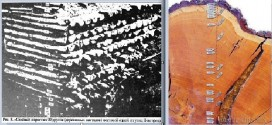 Датировки в археологии метод дендрохронологического анализа